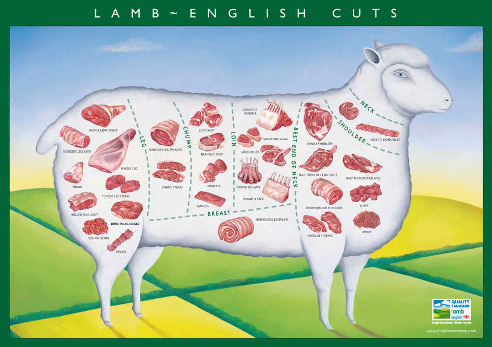 Lamb cuts available from a sheep carcass
